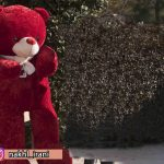 خرس قرمز رنگ