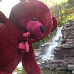 خرس زرشکی ۱۹۰ سانتی