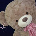 خرس راس گردویی ۲