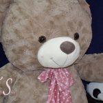 خرس راس ۱۶۰
