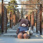 خرس قهوه ایی پلیوری