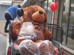 بزرگترین خرس ایران