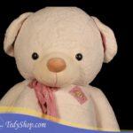 خرس-سفید۳